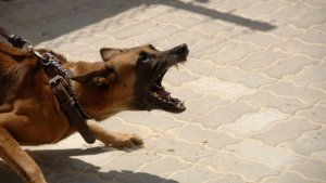 Imatge d'arxiu d'un gos.