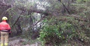Els Bombers retirant l'arbre que ha caigut a l'accés a Costa Cunit.