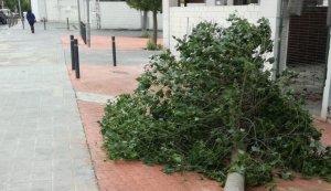 Un dels arbres que ha caigut al Vendrell.