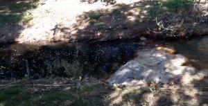 La riera de Sant Miquel, a la zona de Mas Roig, amb l'aigua ennegrida.