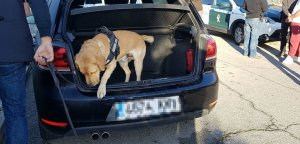 Un gos de la policia, al cotxe dels detinguts a Santa Oliva.
