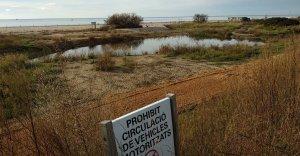 La nova llacuna de les Madrigueres, amb el camí de terra al costat.