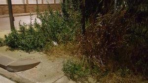 La vegetació d'un solar envaeix la via pública, a Cunit.