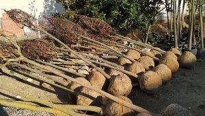 L'Ajuntament de Reus planta 100 nous arbres a la ciutat.