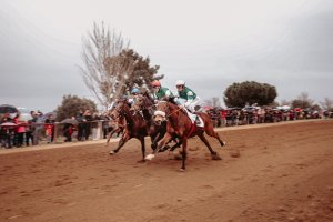 Curses de cavalls a vila-seca per Sant Antoni 2019
