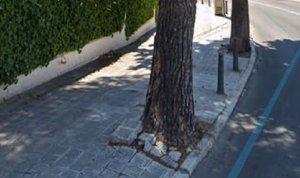 L'arbre que s'ha de tallar a Segur de Calafell.