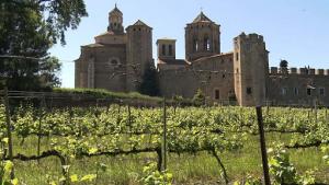 Vinyes al peu del Monestir de Poblet