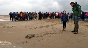 Aquest diumenge al matí s'han alliberat cinc tortugues marines al Delta de l'Ebre.