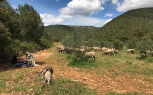 Cunit vol potenciar el seu patrimoni de camins ramaders.