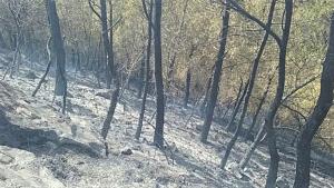 Els Bombers donen per controlat l'incendi de Móra d'Ebre