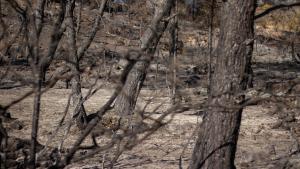Incendi forestal RIbera d'Ebre