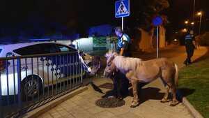 La Guàrdia Urbana de Reus s'ha fet càrrec dels dos animals.