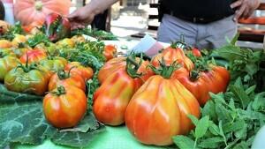 La mostra vol esdevenir un «punt de trobada» del sector de l'horticultura i ajudar a preservar l'agrobiodiversitat