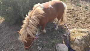 L'animal es trobava a la carretera de Misericòrdia al costat de la depuradora de Cambrils