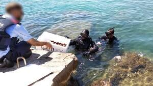 Les dues persones portaven un equip d'immersió i els exemplars intervinguts