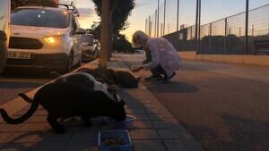 Els voluntaris alimenten els gats cada dia de la setmana