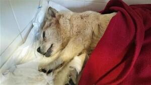 Imatge de la gossa Estrella publicada a les xarxes socials dels Mossos d'Esquadra