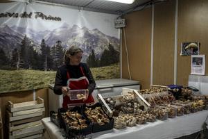 La Mostra del Cava i la Fira de Nadal a Ascó en imatges!