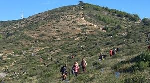 La muntanya del Comú de Calafell ha viscut una jornada de reforestació.