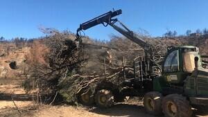 Treballs de restauració de les zones forestals cremades per l'incendi de la Ribera d'Ebre