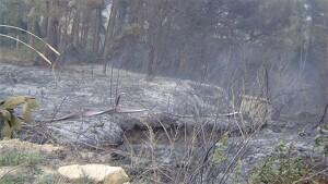 Una de les zones cremades per l'incendi originat per una foguera a les Borges del Camp, l'abril del 2005