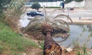 Una palmera tombada sobre l'aigua que nega un carrer al Francàs.