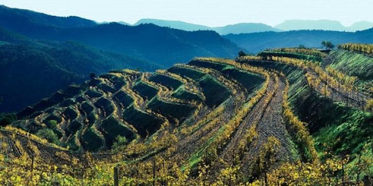Bancals de vinya al Priorat.