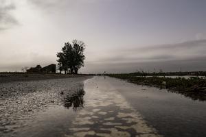 El paisatge desolador al Delta de l'Ebre després dels aiguats en imatges