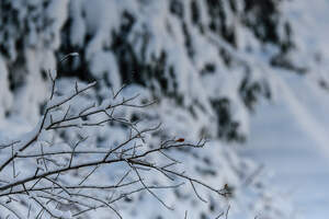 L'Ebre i el Priorat, de postal: la nevada deixa imatges precioses