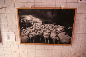 Les imatges del projecte Espais Vius d'Art 2021 a l'Espluga del Francolí