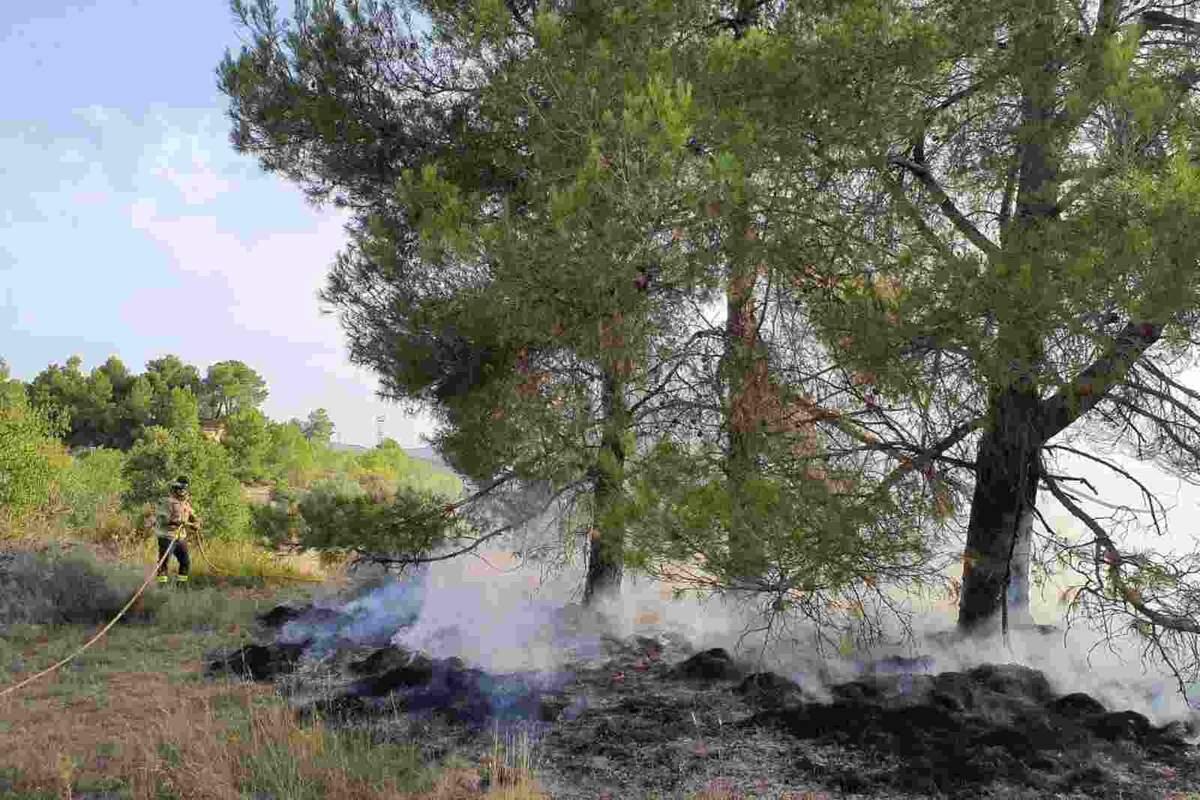 Bomber apagant el foc d'un bosc