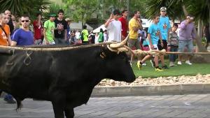 Una de les tardes de bous a la Festa Major de la Ràpita.