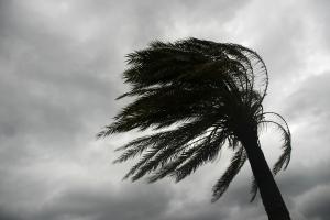 El vent guanyarà intensitat a mitjans de setmana