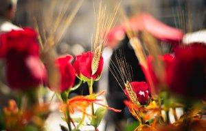 Les roses i els llibres seran els protagonistes del cap de setmana.