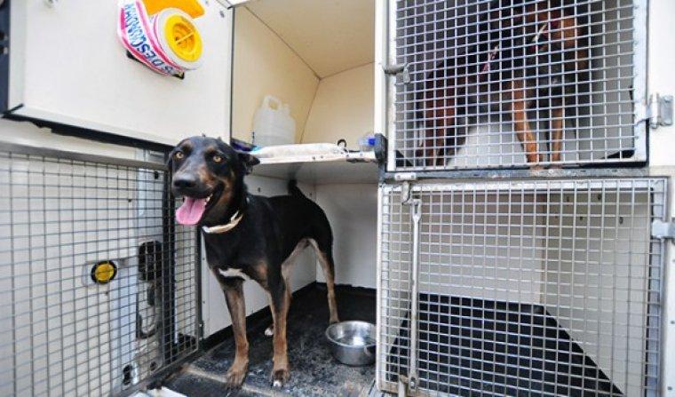 Imatge d'un dels gossos dels Mossos d'Esquadra.
