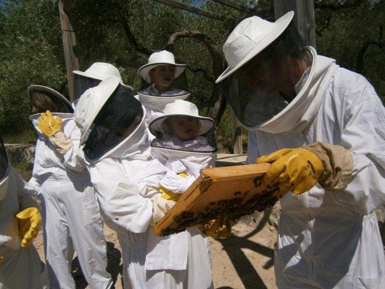Descobrir la importància de les abelles en l'ecosistema pot ser una bona activitat familiar.