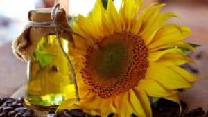 Sunflower oil is one of the most popular vegetable oils.