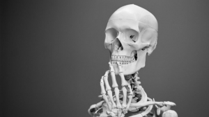 Learn how many bones the human body has and what function each of them has.