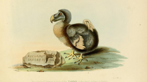 The Dodo bird is perhaps the most famous animal to have gone extinct