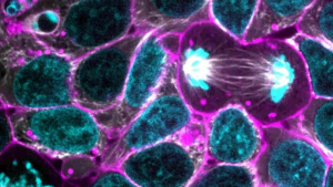 Cell metabolism is responsible for catabolizing and analyzing chemical compounds.