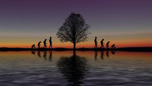 Un árbol en medio del océano y en ambos lados 4 hombres imitando la evolución humana