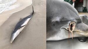 Imagen de un delfín maltratado