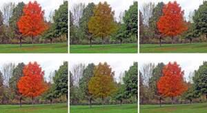 Imagen de los colores de un árbol vistos por un daltónico y por unos ojos sin daltonismo