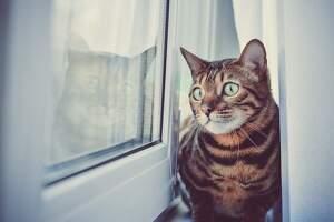 Imagen de un gato negro y rojizo ante una ventana donde se ve su reflejo