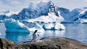 Imagen de un pingüino en la Antártida