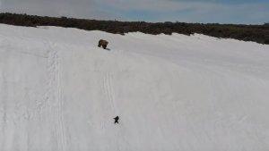 Uno de los resbalones del pequeño oso mientras la madre lo observa angustiada