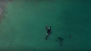 La nadadora se vio sorprendida por las tres orcas