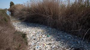 Este aspecto contaminado tiene el río Segura en su desembocadura