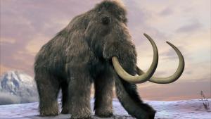 Reconstrucción de un mamut, extinguidos de la Tierra hace unos 10.000 años