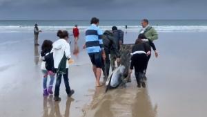 Mucha gente ha colaborado para asistir a los delfines